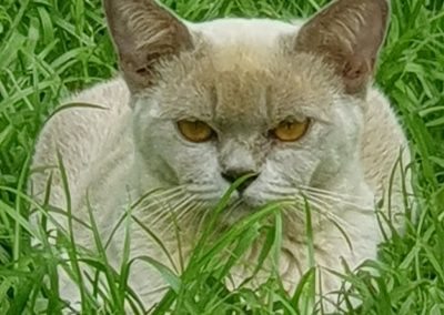 a happy cat on the grass at Feline Fun Cattery