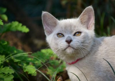 kitten happy in the tranquil garden setting at Feline Fun Cattery